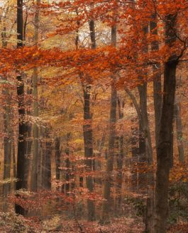At Last Autumn Has Arived…!!!