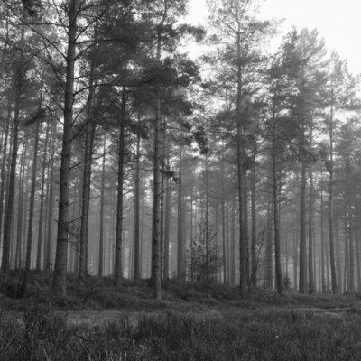 Winterfold Forest, Surrey Hills