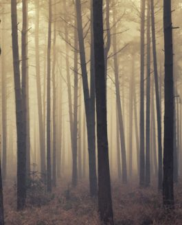 Winterfold Forest