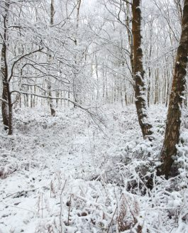 Snow returns to the Surrey Hills !