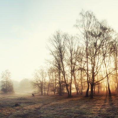 Morning mist on Albury Heath