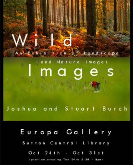 "FAME AT LAST – ""WILD IMAGES"" EXHIBITION 24th – 31st OCT"